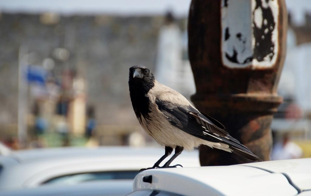 bird-823731_1920