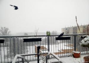 Krähen im Schnee